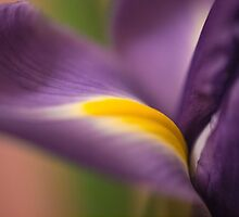 The sensuous iris by Celeste Mookherjee