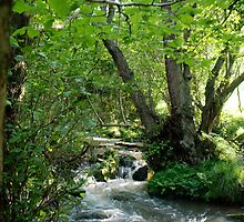 A Stream in the Woods by dougie1