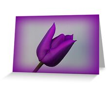 A Purple Tulip Greeting Card