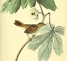 James Audubon Vector Rebuild - The Birds of America - From Drawings Made in the United States and Their Territories V 1-7 1840 - Swamp Sparrow by wetdryvac
