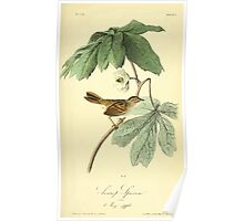 James Audubon Vector Rebuild - The Birds of America - From Drawings Made in the United States and Their Territories V 1-7 1840 - Swamp Sparrow Poster
