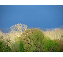 ~Pastels Of Spring Light~ Photographic Print