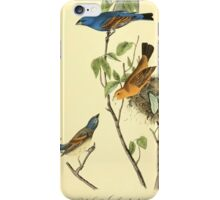 James Audubon Vector Rebuild - The Birds of America - From Drawings Made in the United States and Their Territories V 1-7 1840 - Blue Song Grosbeak iPhone Case/Skin