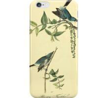 James Audubon Vector Rebuild - The Birds of America - From Drawings Made in the United States and Their Territories V 1-7 1840 - Blue Grey Flycatcher iPhone Case/Skin