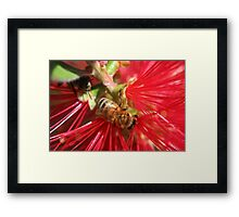Bees Have the Brush Framed Print