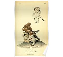James Audubon Vector Rebuild - The Birds of America - From Drawings Made in the United States and Their Territories V 1-7 1840 - Little or Acadian Owl and Common Mouse Poster