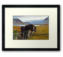 horse farm, Grundarfjordur, Snaefellsnes, Iceland Framed Print
