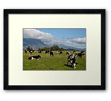 photoj Tas, 'Farmland Mt Roland' Framed Print