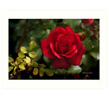 My Love is Like a Red, Red Rose... Art Print