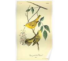 James Audubon Vector Rebuild - The Birds of America - From Drawings Made in the United States and Their Territories V 1-7 1840 - Yellow Poll Wood Warbler Poster