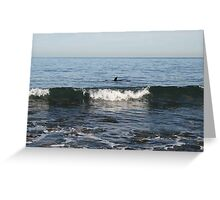 Seal at the Cove. Greeting Card