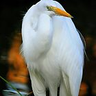 White Heron by LjMaxx