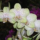 Light Green Orchids by mochilady