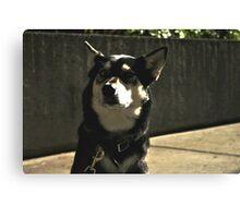Cute Black Dog Canvas Print