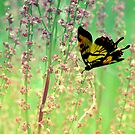 Butterfly in Flight by LjMaxx