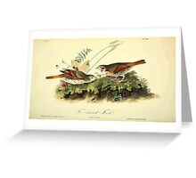 James Audubon Vector Rebuild - The Birds of America - From Drawings Made in the United States and Their Territories V 1-7 1840 - Fox Coloured Finch Greeting Card