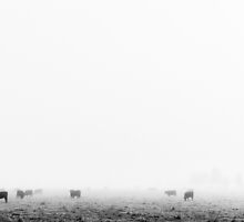 Grazing in the fog - Gippsland by Norman Repacholi