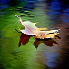 Floating Fall Leaf... by LjMaxx
