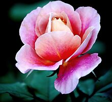 This Rose speaks by LjMaxx