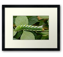 The Very Hungry Caterpillar. Framed Print