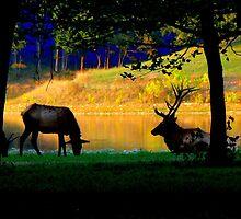 Evening Elk... by LjMaxx