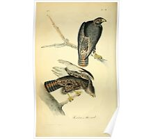 James Audubon Vector Rebuild - The Birds of America - From Drawings Made in the United States and Their Territories V 1-7 1840 - Harlan's Buzzard Poster