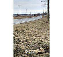 19.4.2015: Dead Fox II Photographic Print