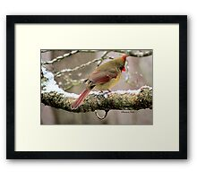 You'd Think Her Feet Would Freeze! Framed Print