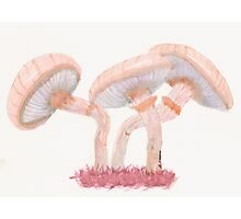 Fantastic Mushrooms Photographic Print
