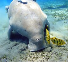 Dugong by anibubble