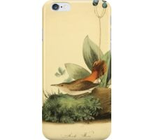 James Audubon Vector Rebuild - The Birds of America - From Drawings Made in the United States and Their Territories V 1-7 1840 - Rock Wren iPhone Case/Skin