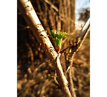 Green Thorn Photographic Print