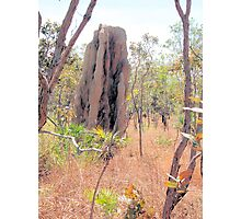 Termite homes Photographic Print
