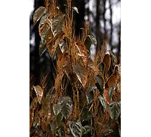 Tufted Leaves Photographic Print