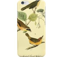 James Audubon Vector Rebuild - The Birds of America - From Drawings Made in the United States and Their Territories V 1-7 1840 - Maryland Ground Warbler iPhone Case/Skin