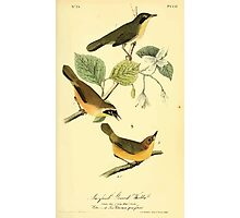 James Audubon Vector Rebuild - The Birds of America - From Drawings Made in the United States and Their Territories V 1-7 1840 - Maryland Ground Warbler Photographic Print