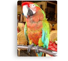 Harlequin Macaw On A Perch Canvas Print