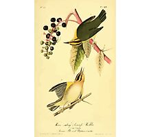 James Audubon Vector Rebuild - The Birds of America - From Drawings Made in the United States and Their Territories V 1-7 1840 - Worm Eating Swamp Warbler Photographic Print