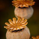 Seedpods by Karen  Betts