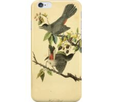 James Audubon Vector Rebuild - The Birds of America - From Drawings Made in the United States and Their Territories V 1-7 1840 - Cat Bird iPhone Case/Skin