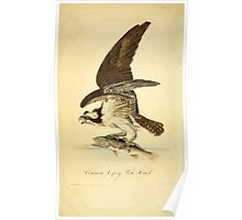 James Audubon Vector Rebuild - The Birds of America - From Drawings Made in the United States and Their Territories V 1-7 1840 - Common Osprey Fish Hawk Poster