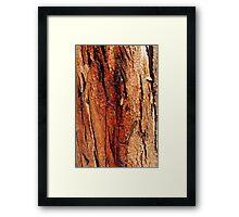 'Coloured bark' Framed Print