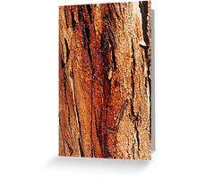'Coloured bark' Greeting Card