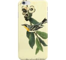 James Audubon Vector Rebuild - The Birds of America - From Drawings Made in the United States and Their Territories V 1-7 1840 - Yellow Throated Wood Warbler iPhone Case/Skin
