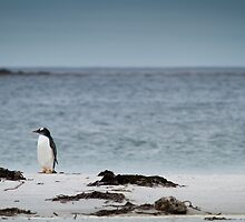 Lonely Penguin by AndyCh