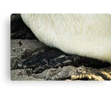 Penguin feet Canvas Print