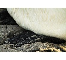 Penguin feet Photographic Print