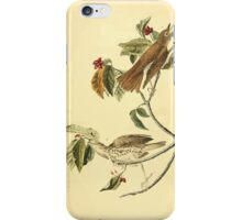 James Audubon Vector Rebuild - The Birds of America - From Drawings Made in the United States and Their Territories V 1-7 1840 - Wood Thrush iPhone Case/Skin
