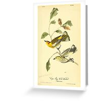 James Audubon Vector Rebuild - The Birds of America - From Drawings Made in the United States and Their Territories V 1-7 1840 - Cape May Wood Warbler Greeting Card