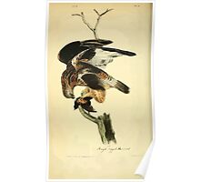 James Audubon Vector Rebuild - The Birds of America - From Drawings Made in the United States and Their Territories V 1-7 1840 - Rough Legged Buzzard Poster